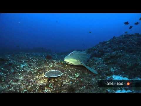 Zebra shark & strange reef animals