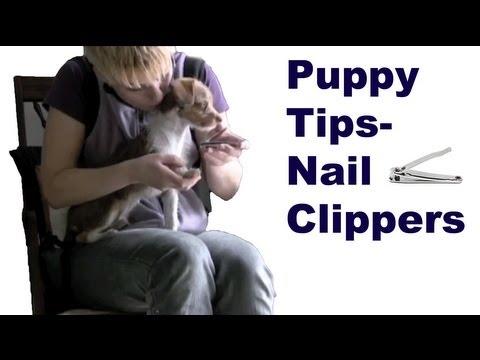 Puppy Tips 2- Nails- Clicker Dog Training Tips