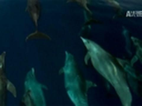 Blood Dolphins- Porter Breaks Down