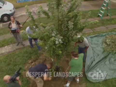 Transplanting a Tree-DIY
