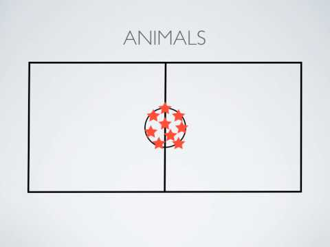 P.E. Games - Animals
