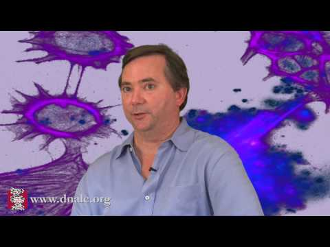 The Neurobiology of Love (8 of 8)