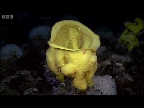 Undersea Volcanoes - Planet Earth - BBC