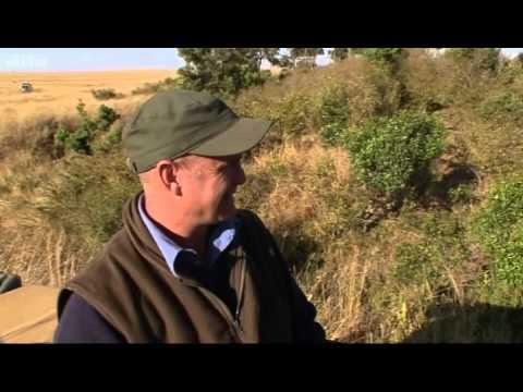 Tamu's four lion cubs - Big Cat Diaries - BBC