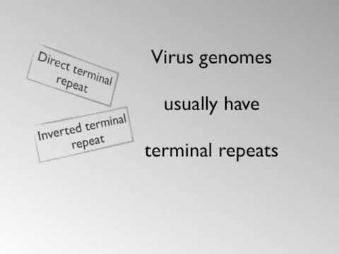 Virus Genome Structure