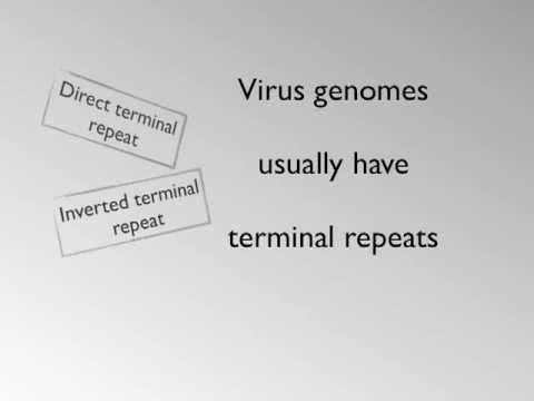 Virus Genome Structure