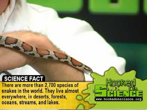 Venomous and Non-Venomous Snakes