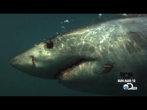 Shark Week 2012 | Starts Sunday, Aug 12, 2012 at 9PM e/p on Discovery