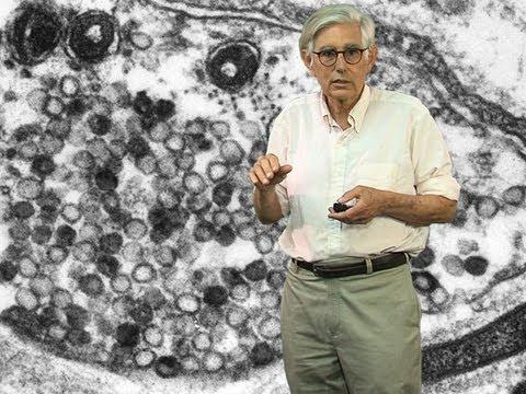 Thomas Reese: Visualizing Synaptic Signaling