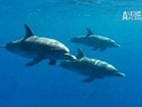 Secrets of Dolphin Diving