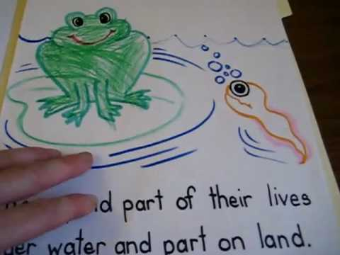 Preschool - Science. Amphibians folder