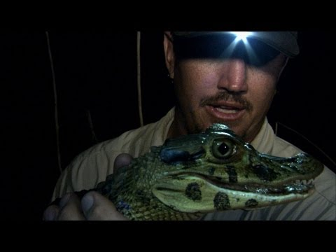 Python Hunters - Catching Black Caimans