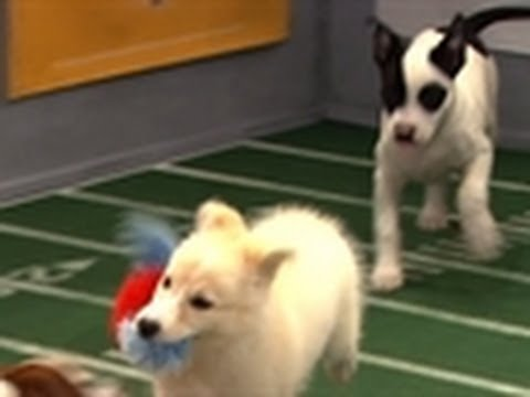 Puppy Bowl VIII: One for the Record Books