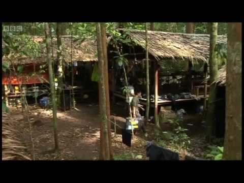 Reviewing the Discoveries - Expedition Borneo - BBC