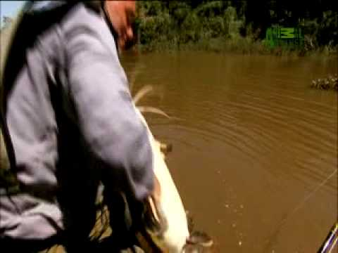 River Monsters - Air-Breathing Catfish