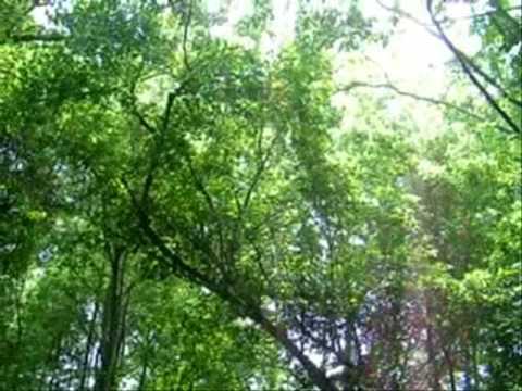 Seasonal Change in Hardwood Forest, West Virginia USA