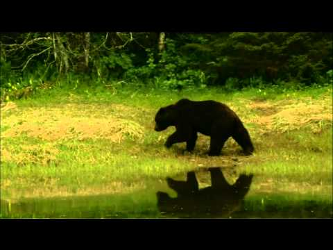 NATURE | Fortress of the Bears | Inside the Fortress | PBS