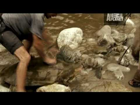 River Monsters: Turtle Strikes Like a Snake