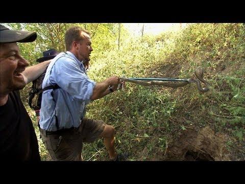 Python Hunters - Cobra Den