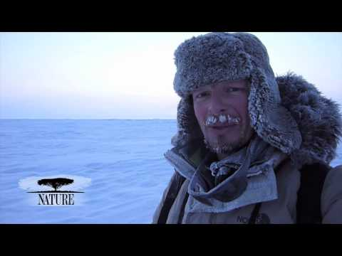 NATURE | Bears of the Last Frontier | Video Diary: Chris on the Ice | PBS