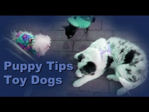 Puppy Tips: 1 - Clicker Dog Training