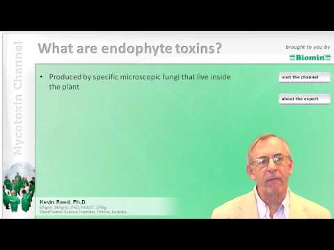 What are endophyte toxins?