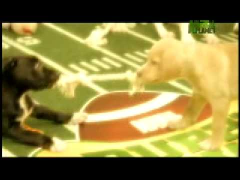 Puppy Bowl Classic - Welcome to Puppy Bowl IV