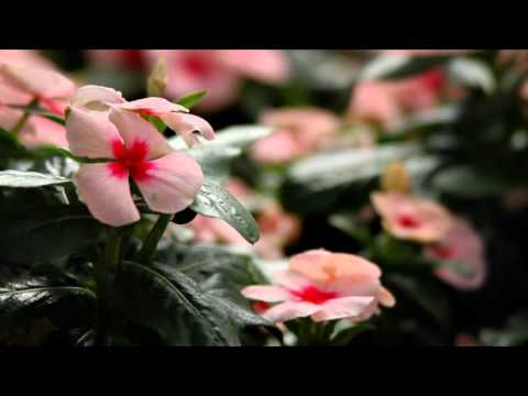 The Home Depot - Flower Power (episode 2) The Flower Show