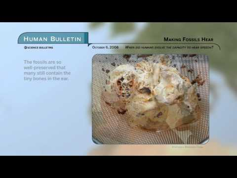 Science Bulletins: Making Fossils Hear