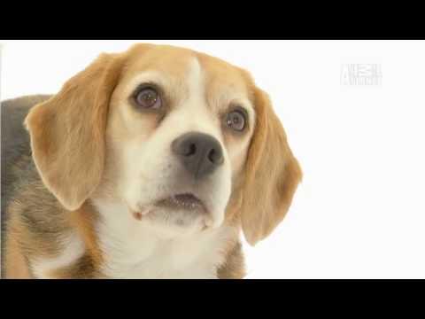 Puppy Bowl VI: Response to Apple iPad