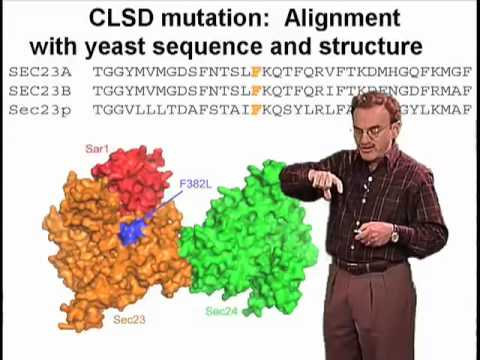 Randy Schekman (Berkeley) Part 3: Human Diseases of Vesicle Budding