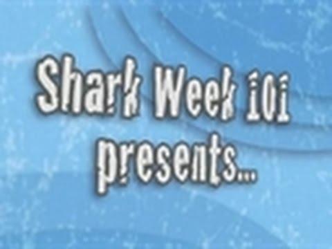 Shark Week 101 - How to Tell If a Shark Is Upset