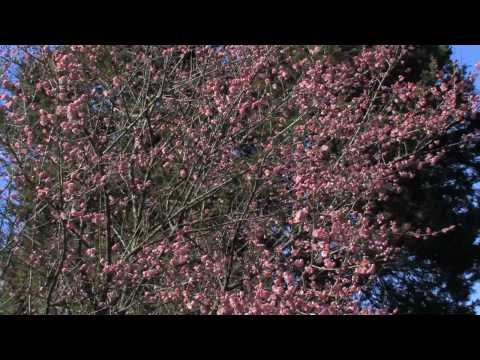 NYBG Color Report with Jon Peter — Early Spring 2009