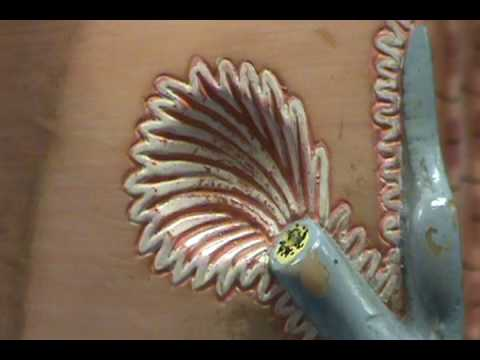 Skeletal Muscle Fiber Model - Neuromuscular Junction