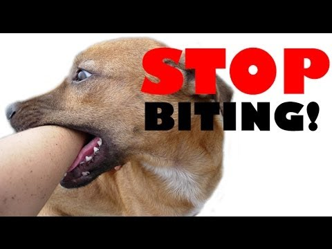 Stop puppies biting- clicker dog training