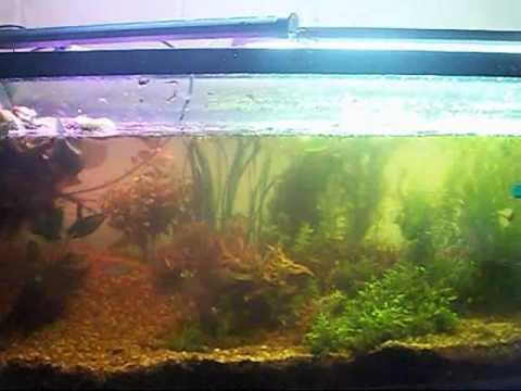 New Aquarium Plants,  Lost A Fish