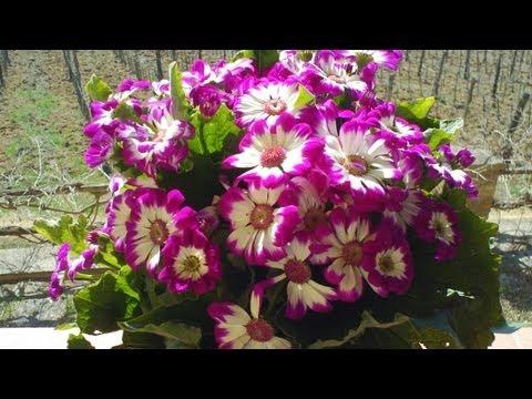 Springtime in Italy || KIN STORY #47