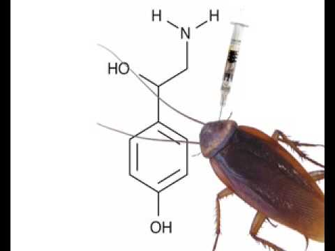 Zombie cockroaches revived by brain shot