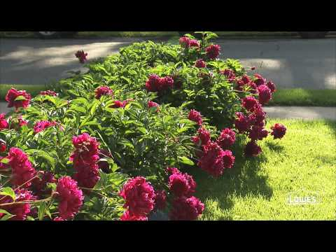 Staking Perennials