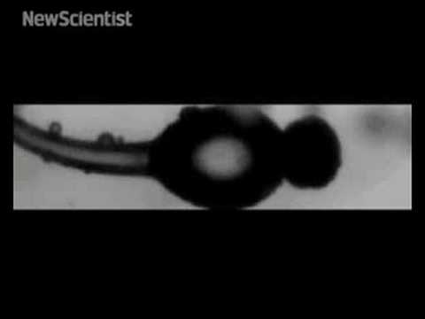 New Scientist video round-up - September 19, 2008