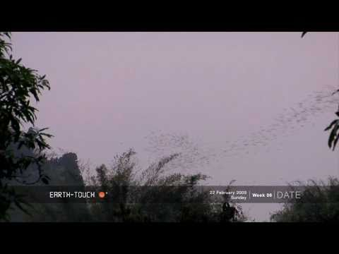 Thousands of bats on the hunt