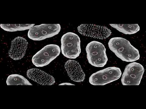 Plasmids | Genetics | Biology