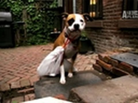 Superfetch- Dog Takes Out Trash