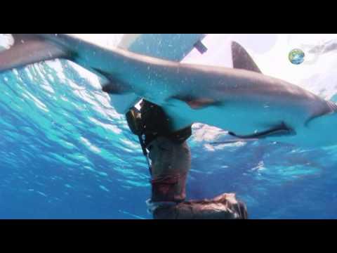 Shark Attack Survival Guide - Fending Off Sharks   Shark Week 2010