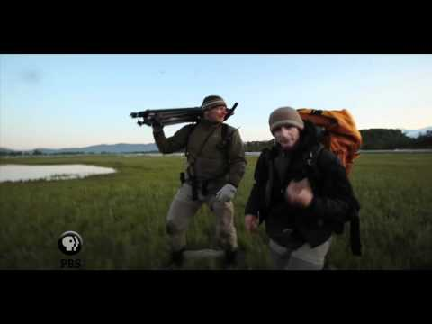 NATURE | Bears of the Last Frontier | Video Diary: Joe Out in the Field | PBS