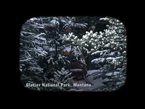NATURE | Wolverine: Chasing the Phantom | The Phantom | PBS