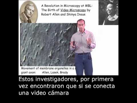 Ron Vale (UCSF/HHMI): Molecular Motor Search - Myosin to Kinesin with Spanish Subtitles