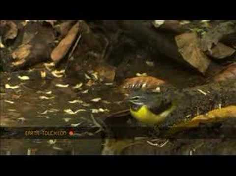 Tadpoles, snake and spider in Thailand forest