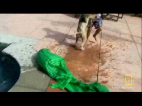 Soap Opera Dog