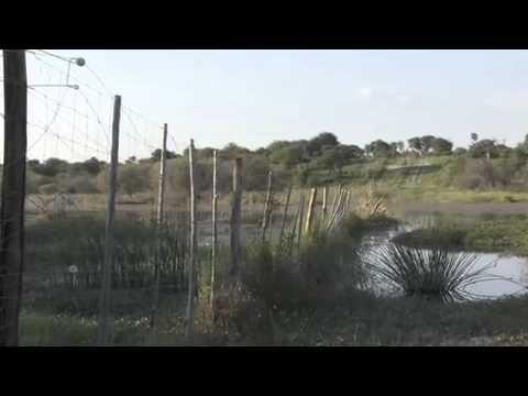 Zebra Tracking